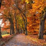Dzisiaj początek astronomicznej jesieni